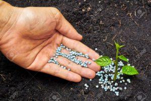 Slow Release Fertilizing