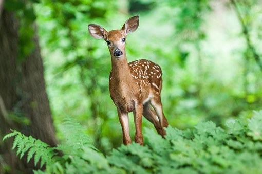 Rabbit and Deer Proofing your Container Garden- Stop Flower Heads Disappearing