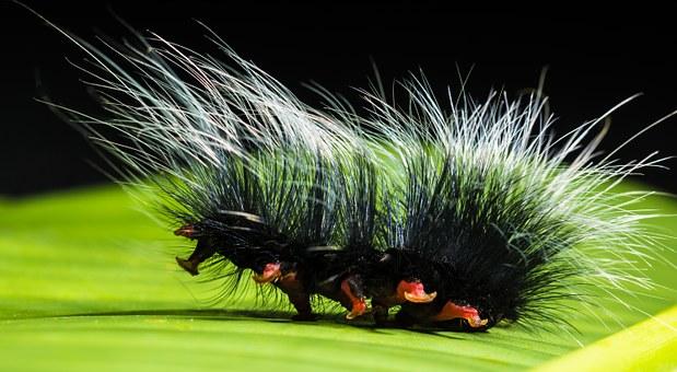 Caterpillar damage