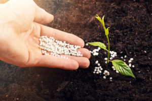 Hand fertilising