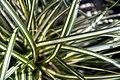 Carex o