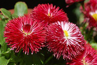 Plants for Hanging Baskets-Not the Favourite Eight