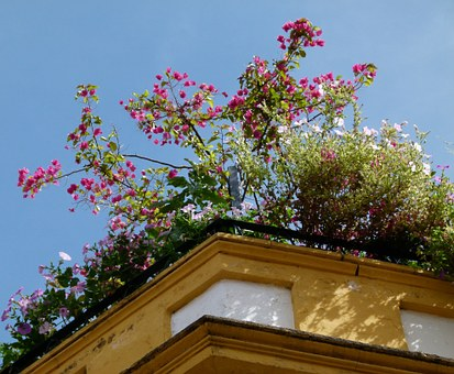 Plants for Rooftop Gardens (Growing on a Windy Site)