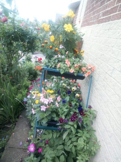 PatioGro Multilevel Growing Frame, a Product Review
