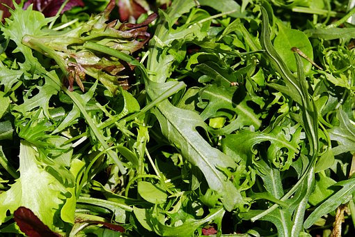 Grow Your Own Salad Leave Mixes in Containers (Grow Much More Than Lettuce)
