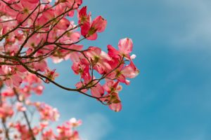 Chinese blossom Garden