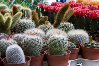Indoor Container Gardening (How to Get the Best from Your Indoor Plants)