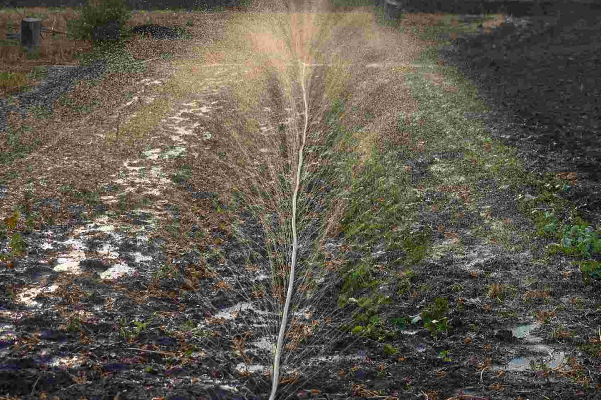 Micro-Drip Irrigation System, a Review- (A Splash or a Wet Drip?)
