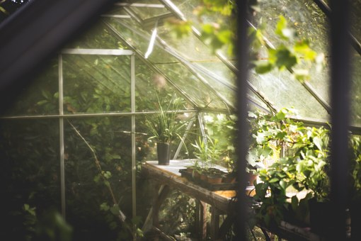 Greenhouse are a gardener friend