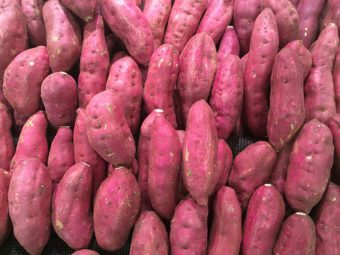 Sweet Potatoes are not seen in container gardens