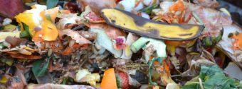 Kitchen waste ideal in compost