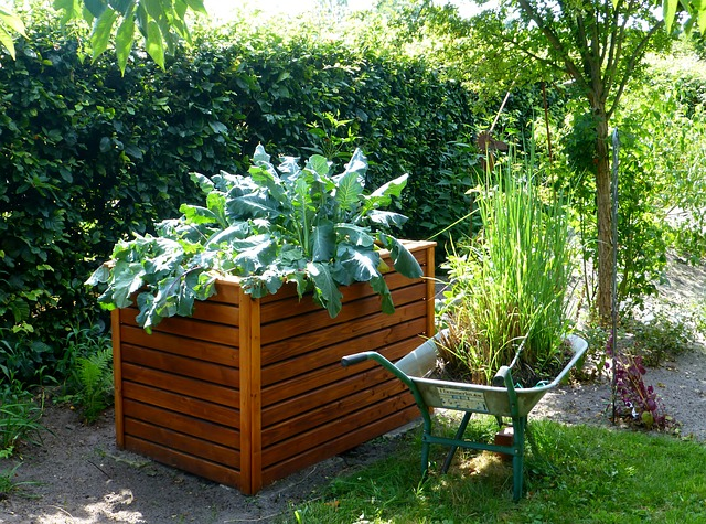 High raised beds are ideal for wheelchair users
