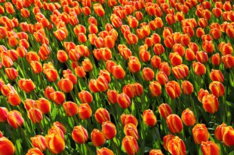 We all need to plant more bulbs