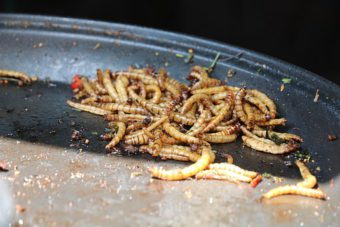 Yummy mealworms