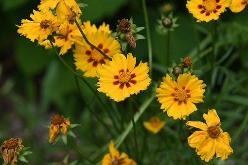 Plants for Sunny and Dry Conditions- Growing Drought Tolerant Plants in Full Sun
