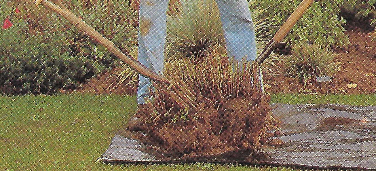 Step 1: Lift the whole clump up with a fork or spade, Some plants can be divided by forcing the clump apart with two forks.