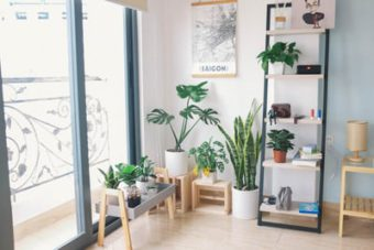 You need a stand to display your houseplants