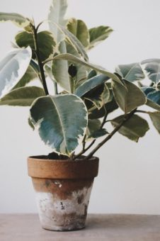 What You Need to Have in Your Houseplant Kit?
