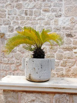 The Best Palm and Fern Houseplants to Grow