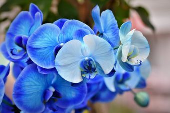 Growing Orchids as Houseplants- Part I Getting the Growing Conditions Right