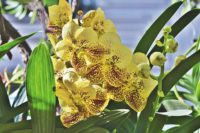 orchids need good light