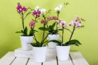 Orchids do well in the right temperature