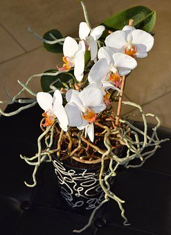 Orchids need the right feeding