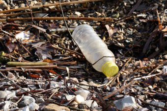 Plastic bottles are made from PET