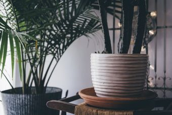 Houseplants can bring so much joy but what about if they do not look too good.