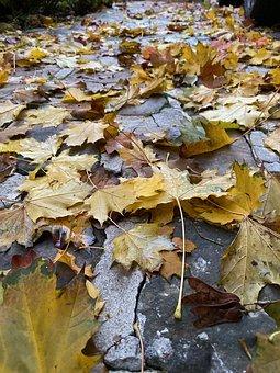 Leaf make a good soil improver