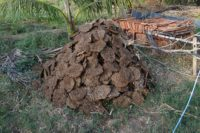 Cow dung is a manure hit