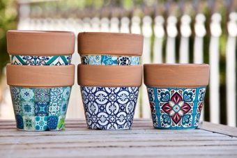 Go crazy with your terracotta pots