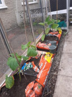 Plants growing in grow bags