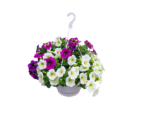 Hanging baskets look beautiful in any garden