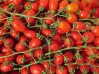 Tomatoes need Magnesium to do well.
