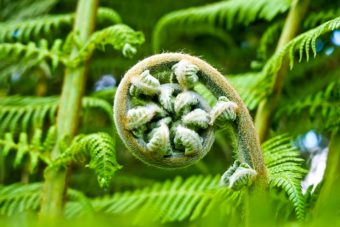 Ferns are a mainstay in the Exposed container garden.