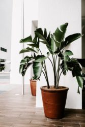 A correct watered plant should look health.