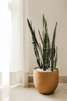 A healthy houseplant is a well-watered houseplant