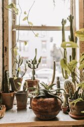 Pots come in different sizes and shapes, so you will need a lot when you move a plant from one to another.