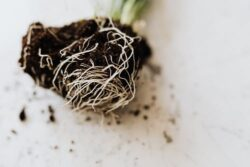 A rootbound plant is an unhappy plant, it needs to be rehoused quickly