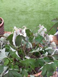 Why is your plant wilting?