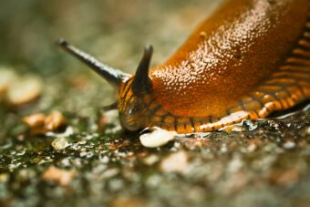 Slugs are a serious pest in the garden