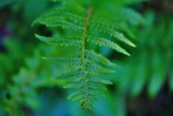 Ferns are great as part of the container display in the shade