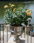 You can present your Roses in any container