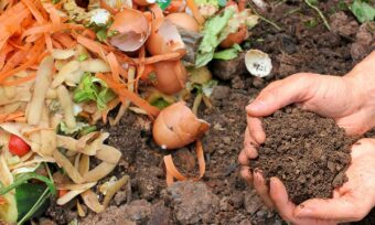 Miracle-Gro Performance Organics All-Purpose, Fruit and Veg versus Potted Plant Composts- Is there a difference?