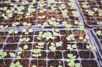 We all want seedlings like this-Health, straight and short