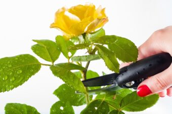 Rough Guide to Pruning-Getting the Basics Right