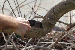 Pruning implements are important