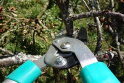 All the pruning tools are important and must be kept in good usage