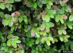 Fungal infections can affect multiply plants
